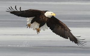 Our region's eagles, through the lens of J.B. Forbes