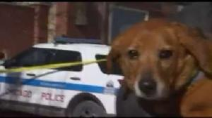 Video: 7 dogs reunited with owners after van was carjacked
