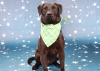 Dog of the Week: Meet Ashby (adopted)