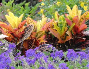 Tropicals add wow factor to your garden