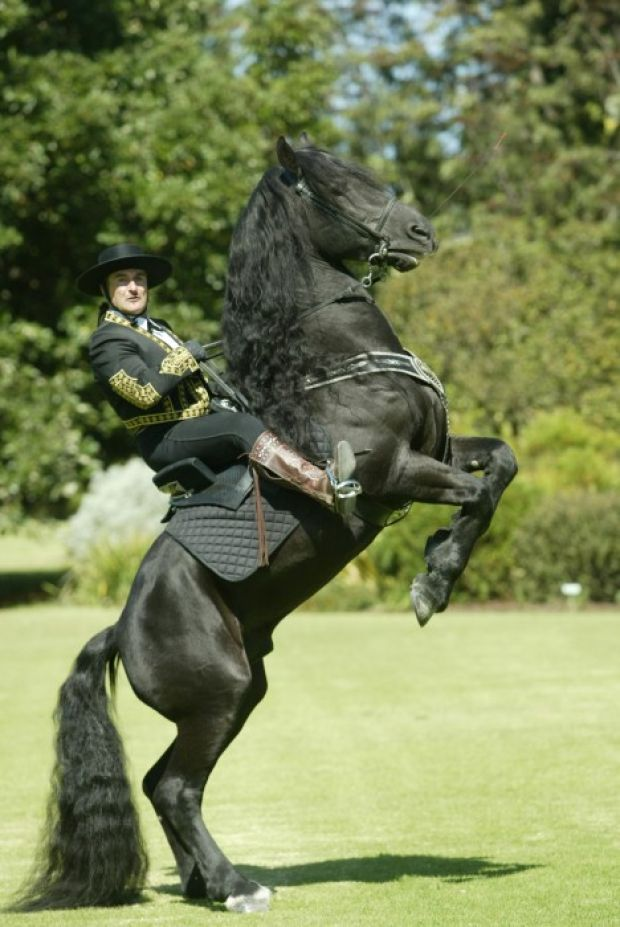 Sir, may I shake your hoof? Royal Horses come to St. Louis ...
