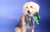 Dog of the Week: Meet Comet (adopted)
