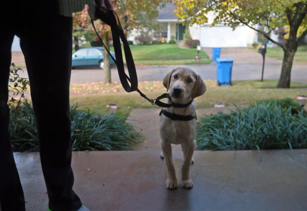 Meet Murphy, the dog who can sniff out diabetic alerts