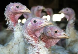 Hormel Foods to USDA: Your turkey forecast is for the birds