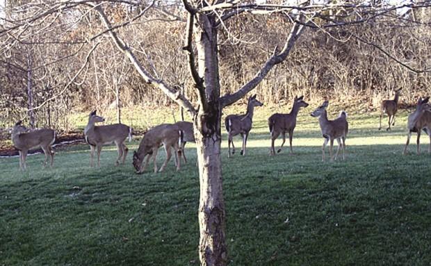 Deer Bow Hunting News