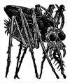 Tom Huck bug