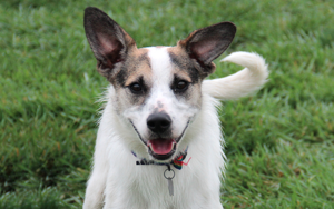 Dog Of The Week: Meet Zoe
