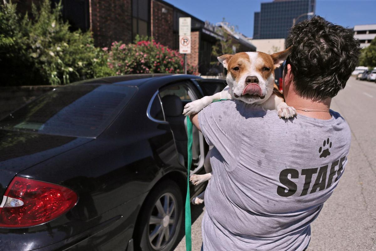 Volunteers Step Up During Power Outage, Make Stray Rescue Founder 'Proud To Be A St. Louisan'