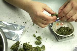 Judge: Missouri right-to-farm doesn't cover marijuana