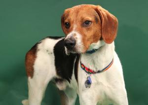 Dog Of The Week: Meet Harold