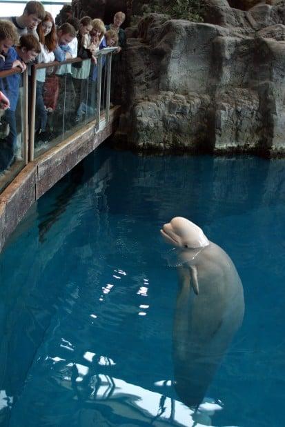 Shedd Aquarium Free Days Image Search Results