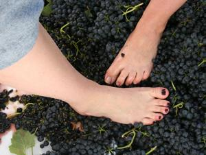 Fun afoot at winery's grape stomp