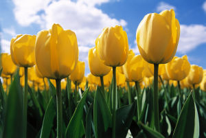 With spring comes Easter and a renewal of Christian faith