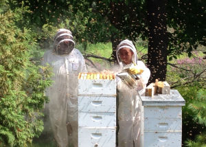 Savage City Council considering residential beekeeping regulations