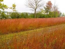 Council will consider revised prairie grass plan