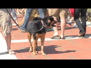 2013 N.C. State University Dog Olympics