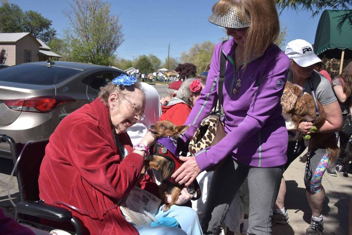 PHOTO GALLERY: Canines spread Relay for Life message at Bark for Life