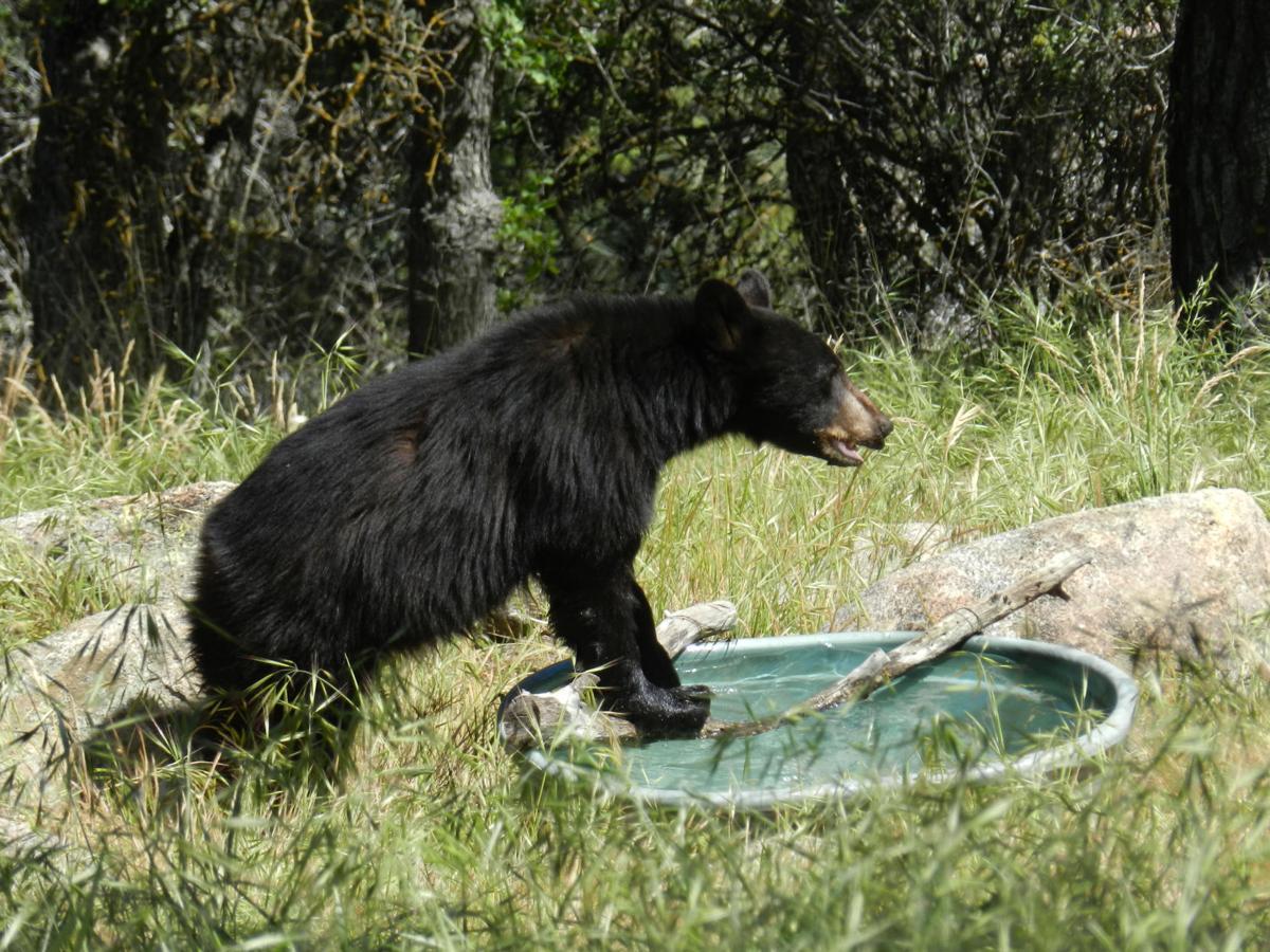 Natural Sightings bear