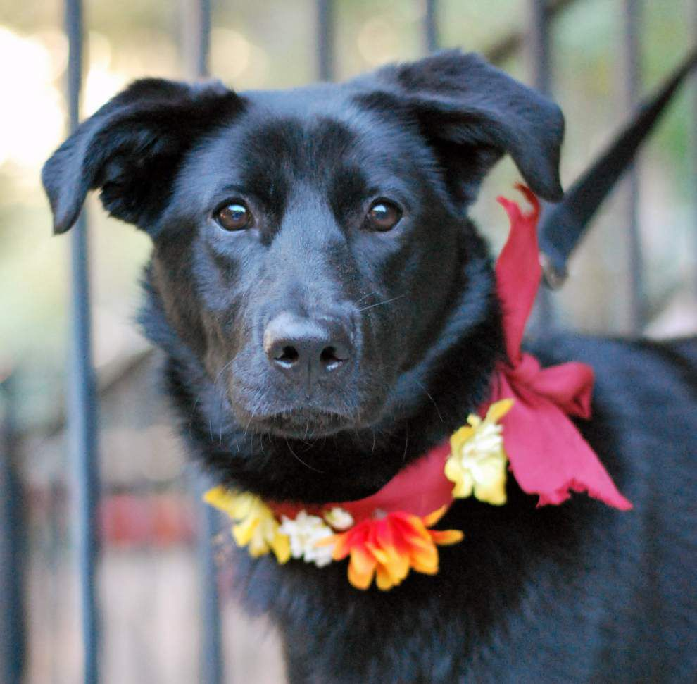 Southside pets available for Feb. 19, 2015 _lowres