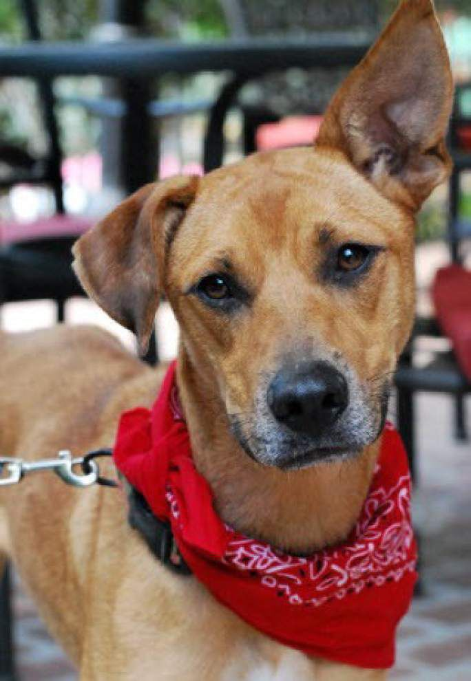 Southeast pets available for Nov. 13, 2014 _lowres