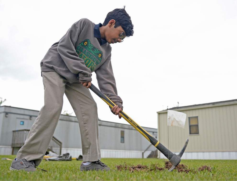 Video: Volunteers plant young satsuma trees at Glasgow Middle ...
