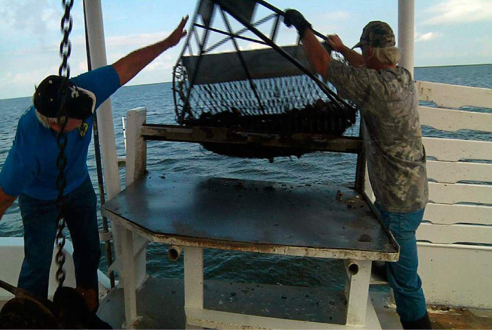 Gulf oyster harvest has nose-dived since BP spill _lowres