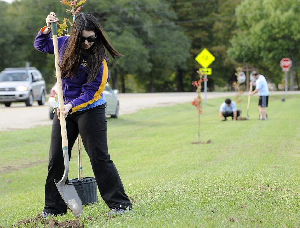 ReCover Acadiana volunteers planting 260 trees across Lafayette _lowres