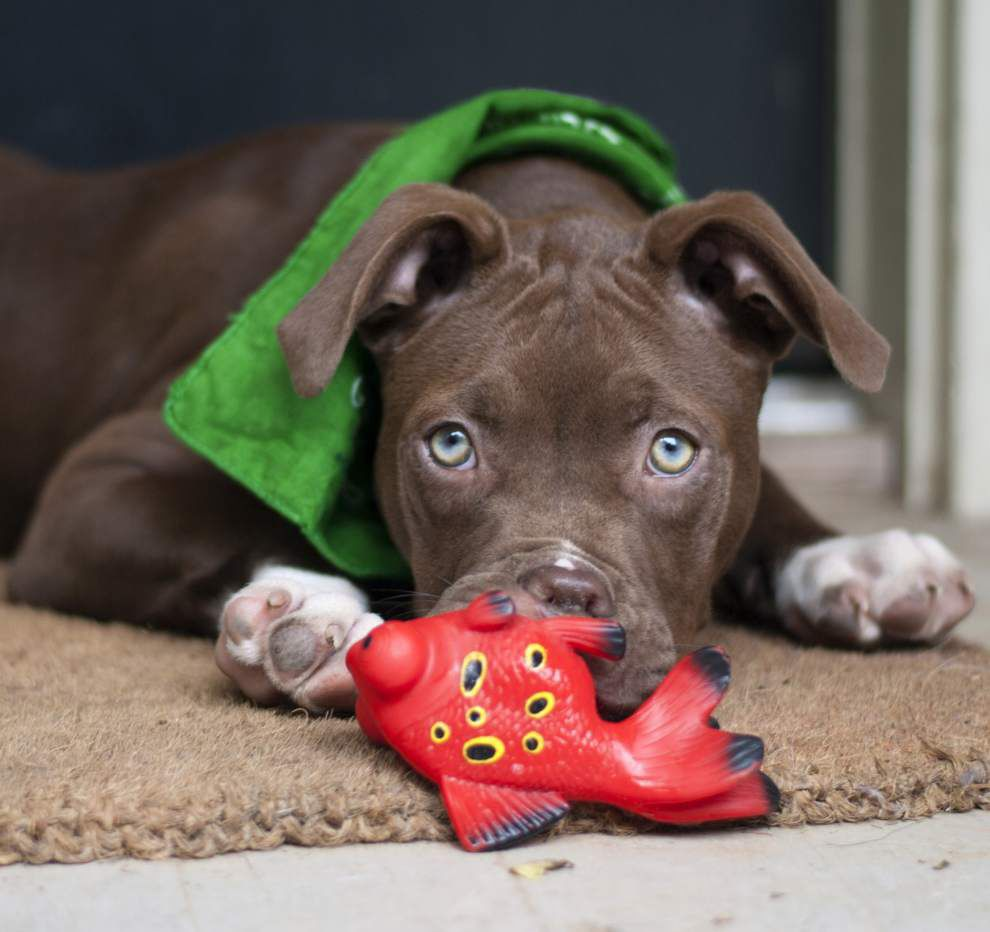 Mid City pets for April 30, 2015 _lowres