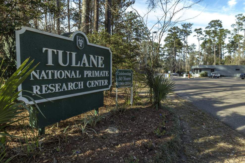 Tulane Primate Research Center regains permit to work with dangerous biological agents _lowres