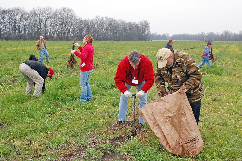 Reforestation project along the lower Mississippi River could help landowners as well as the environment _lowres