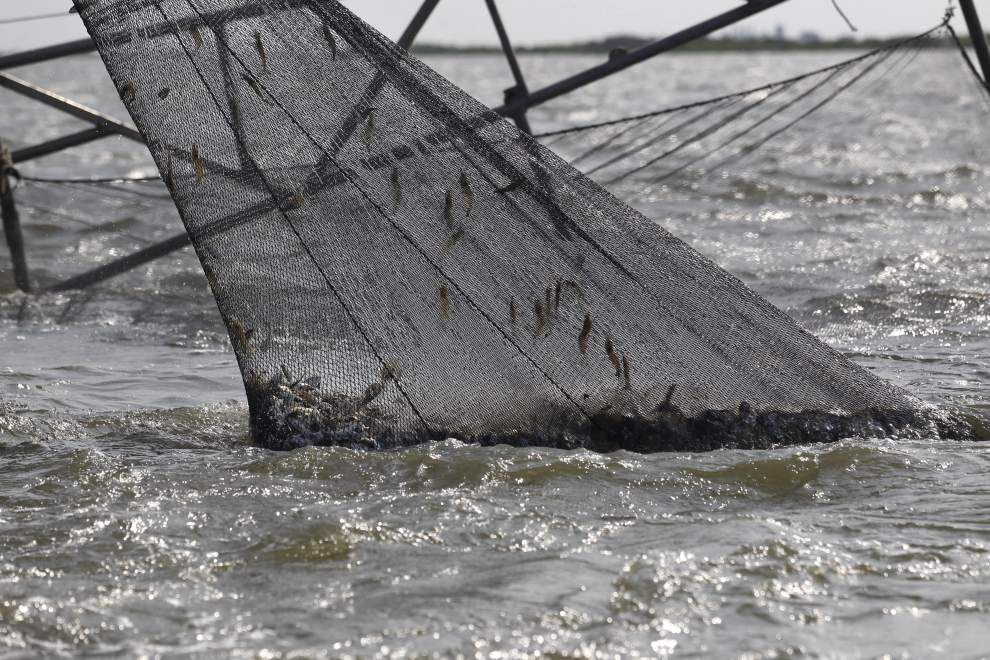 Louisiana House gets bill to let state agents enforce sea turtle law _lowres