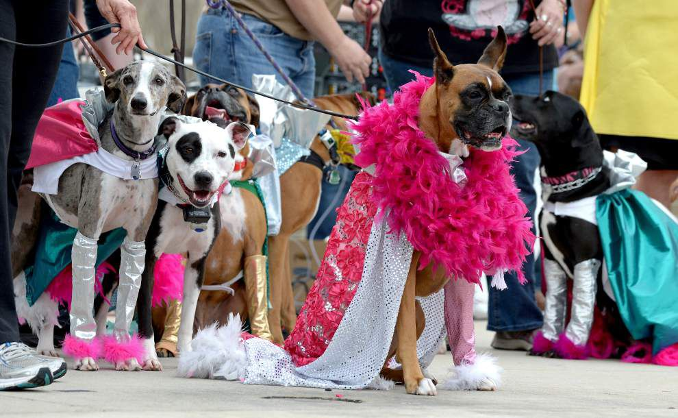 Photos: Time for the pups to parade, Krewe of Mutts takes over downtown Baton Rouge _lowres