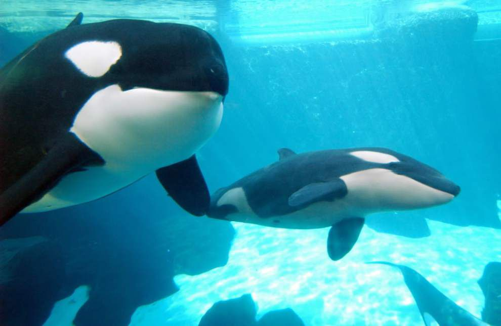 5 things to know about captive marine mammals _lowres