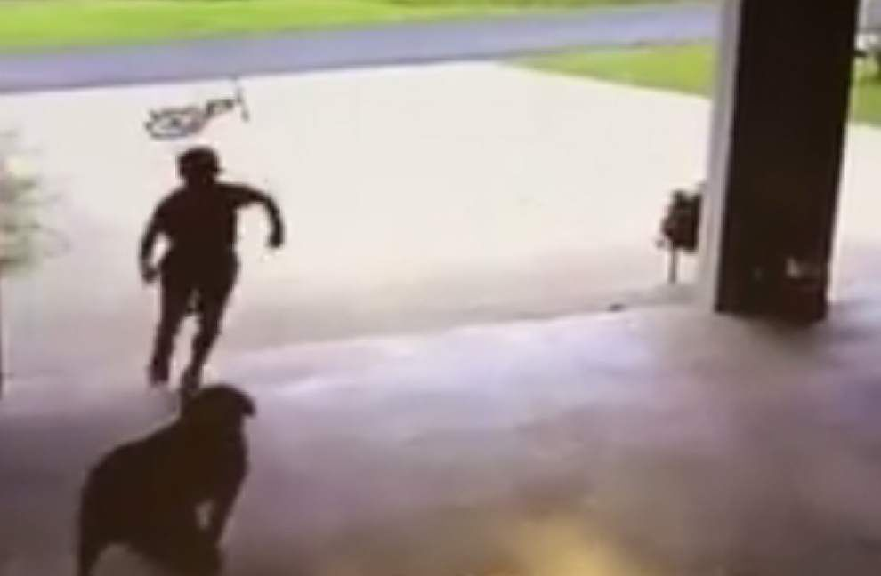 Viral video elicits OMGs, 'Awwws' as Louisiana boy makes stealthy visits to hug, play fetch with dog _lowres