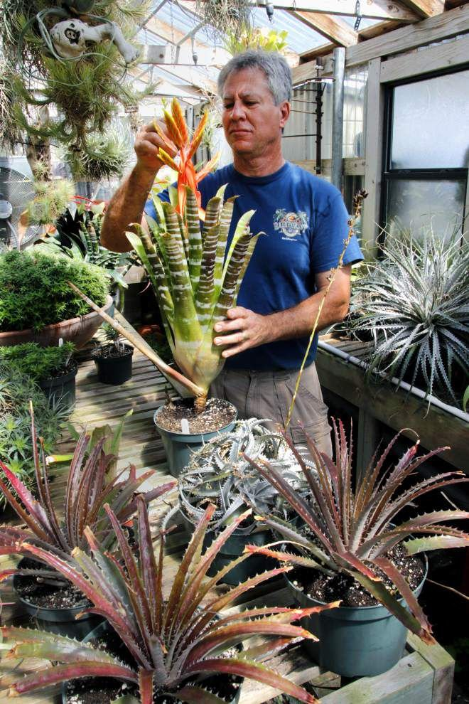 For Bryan Windham, 'the bromeliad was a totally new experience' _lowres