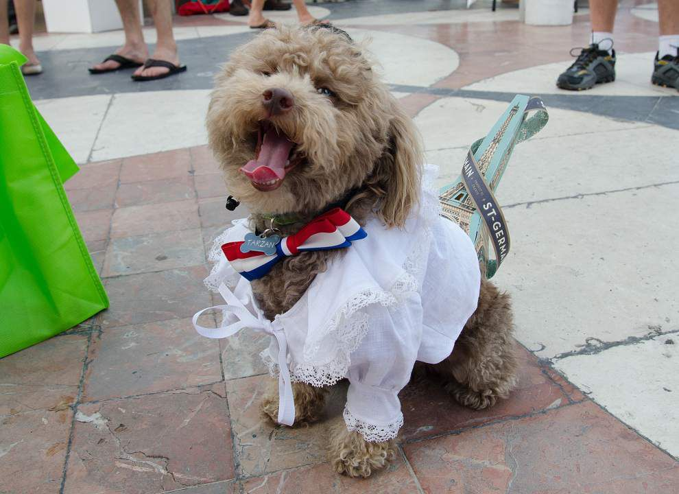 The tails of Bastille Day: French Dog Contest celebrates event _lowres
