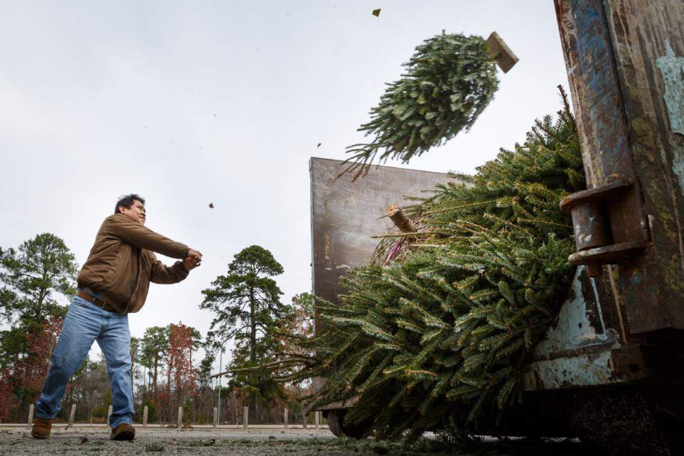 Time to toss your Christmas tree? How, when Baton Rouge-area residents can put theirs out _lowres