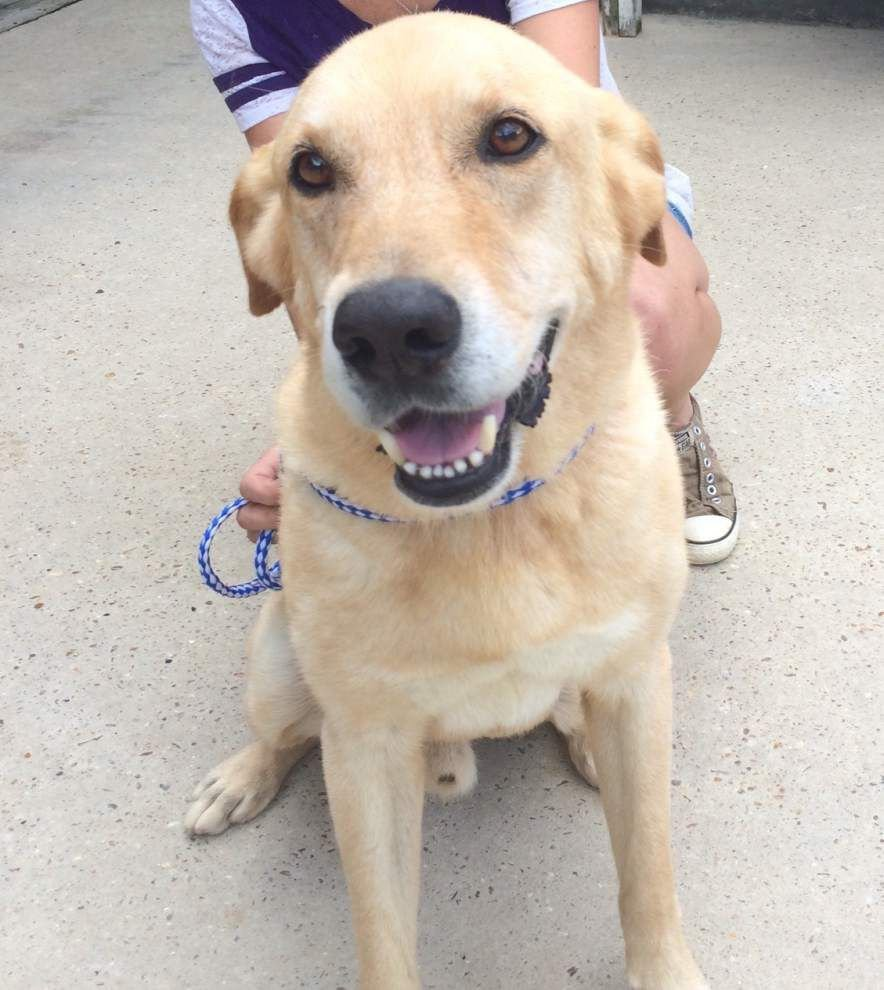 Livingston-Tangipahoa pets available for Oct. 16, 2014 _lowres