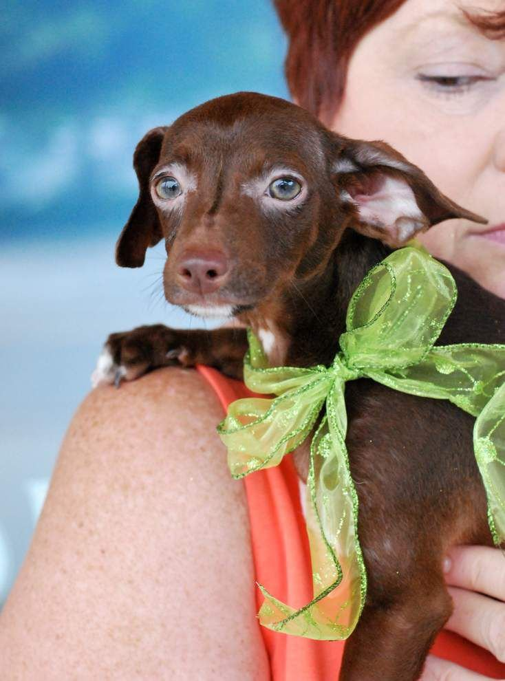 Southside pets available for June 12, 2014 _lowres