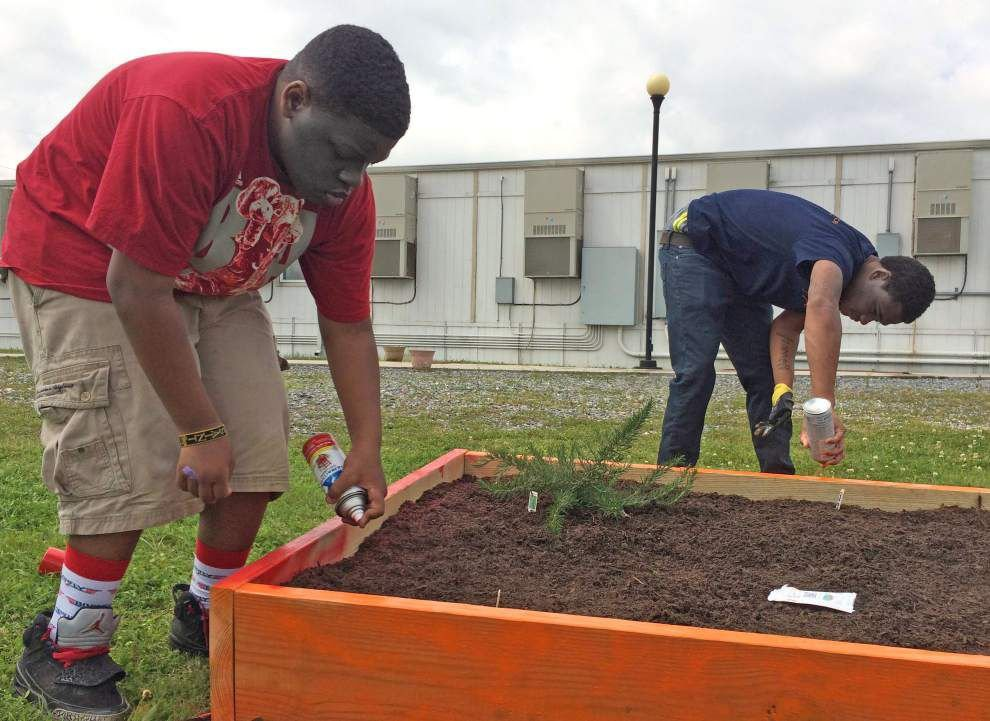 Carver students see skills blossom through work on garden project _lowres