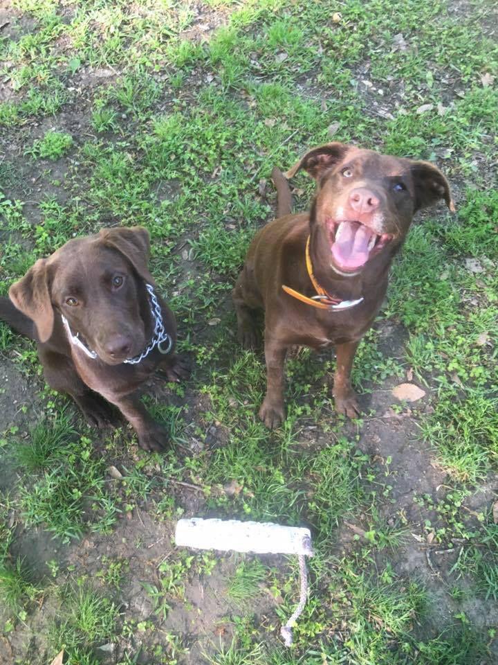 Walker dogs