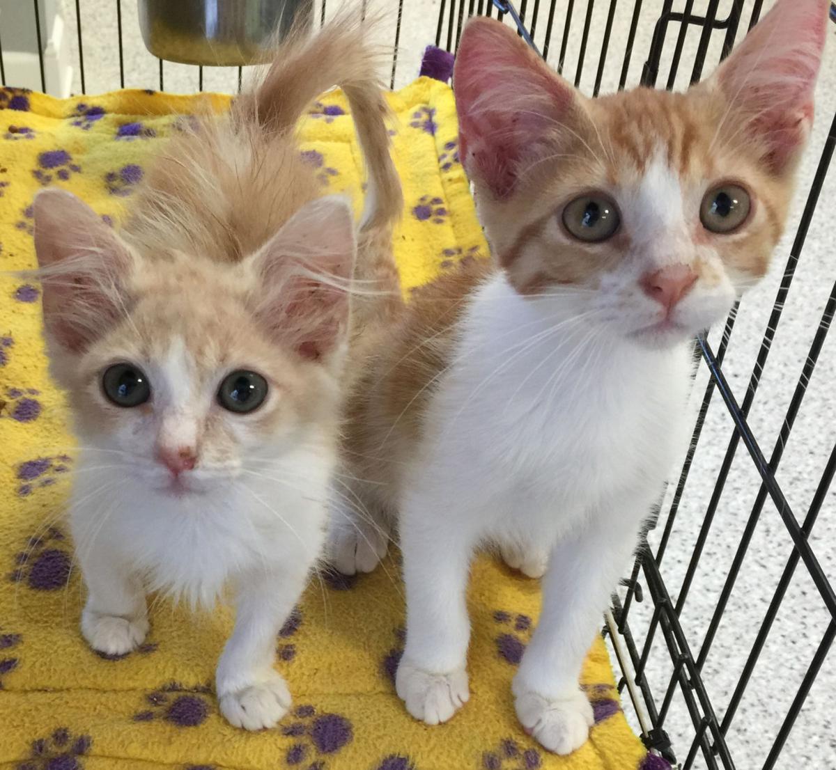 catsss.102016