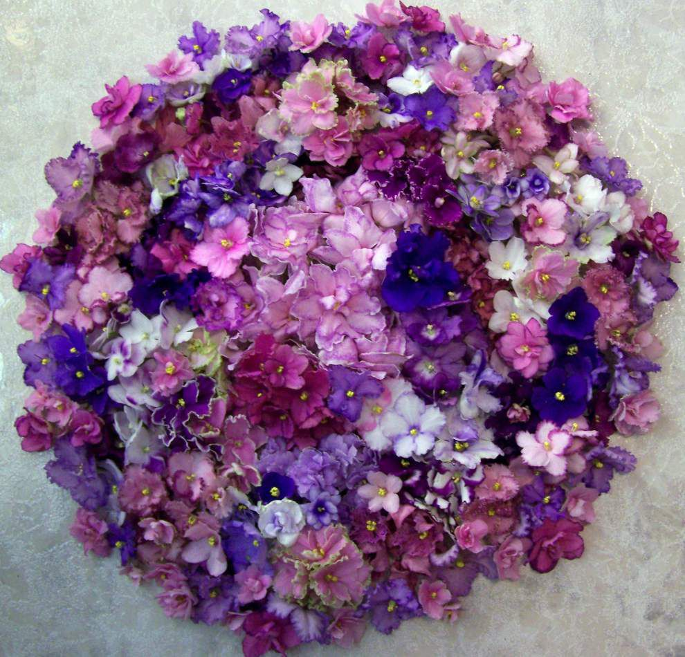 35th Annual African violet Show and Sale set to bloom _lowres
