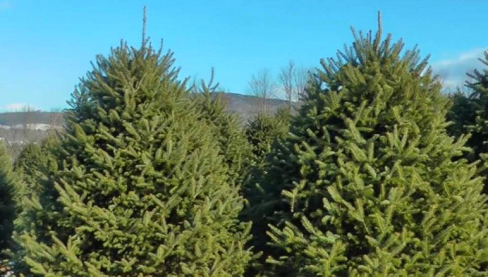 Internet, woods compete for Christmas tree sales _lowres