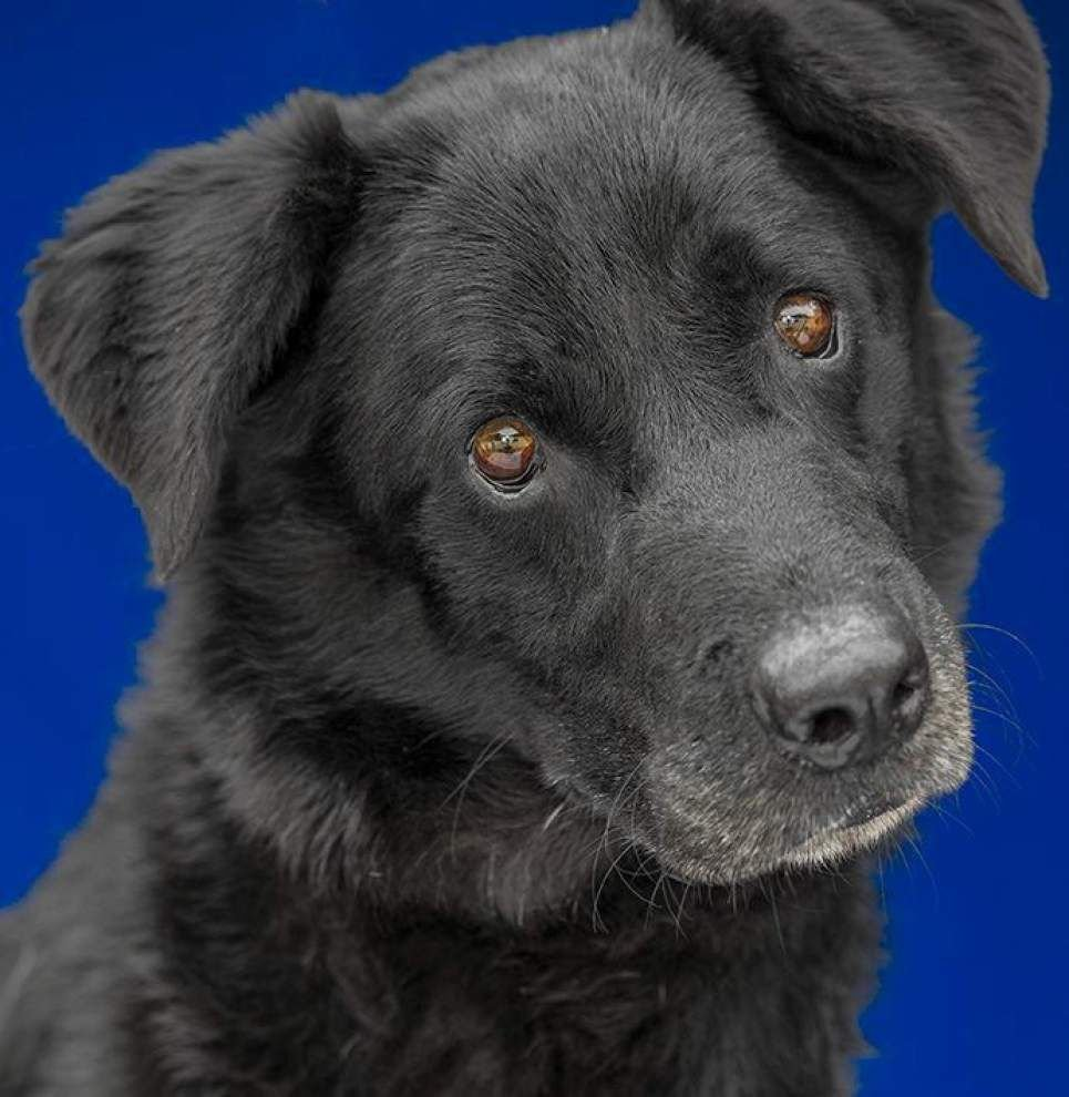 Livingston-Tangipahoa pets available for Oct. 9, 2014 _lowres