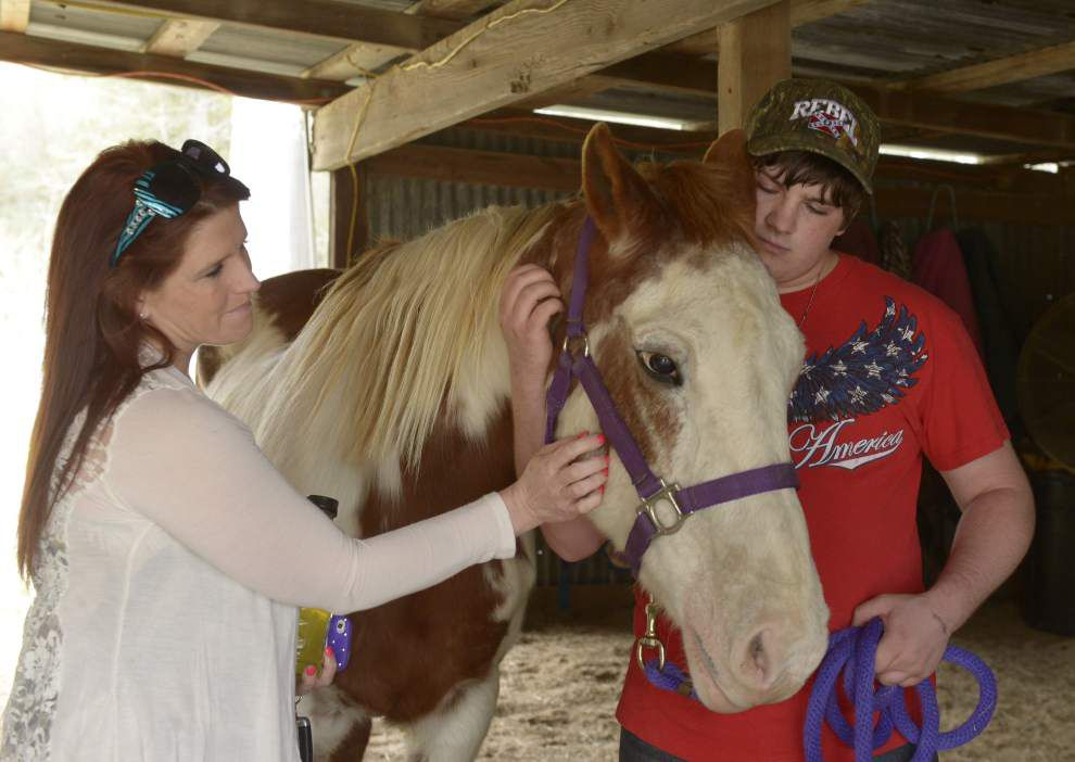 Families find a way to deal with behavioral issues by making connections in equine therapy sessions _lowres