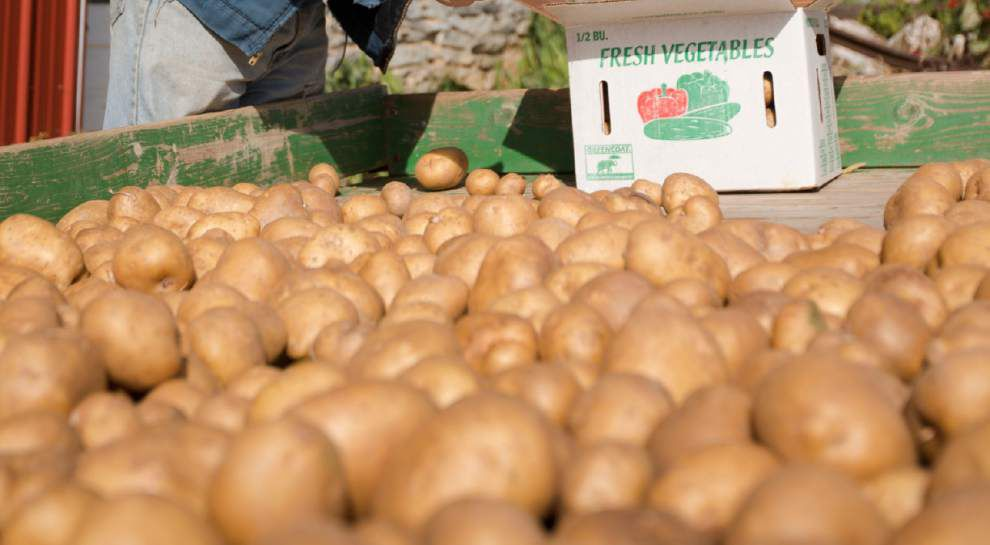 Congress puts potatoes on menu for low-income moms _lowres