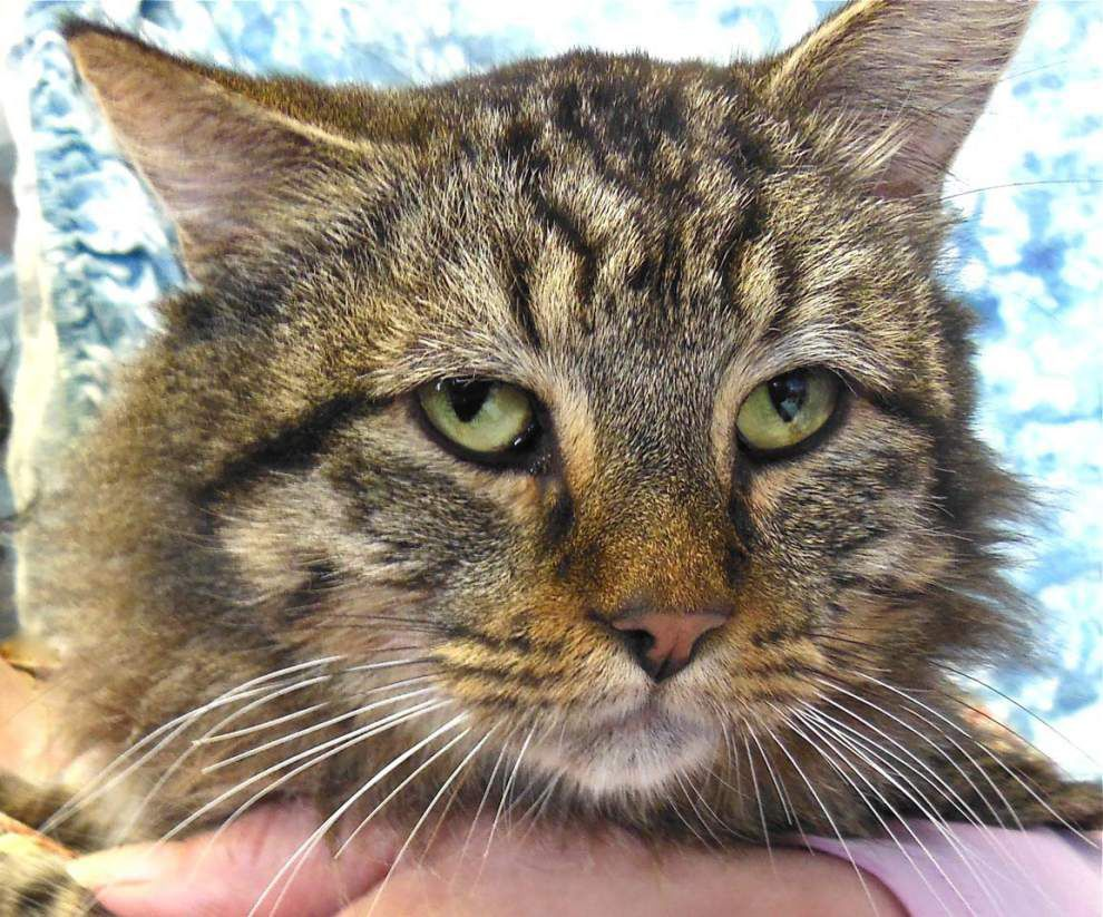 West Feliciana pets for March 5, 2015 _lowres