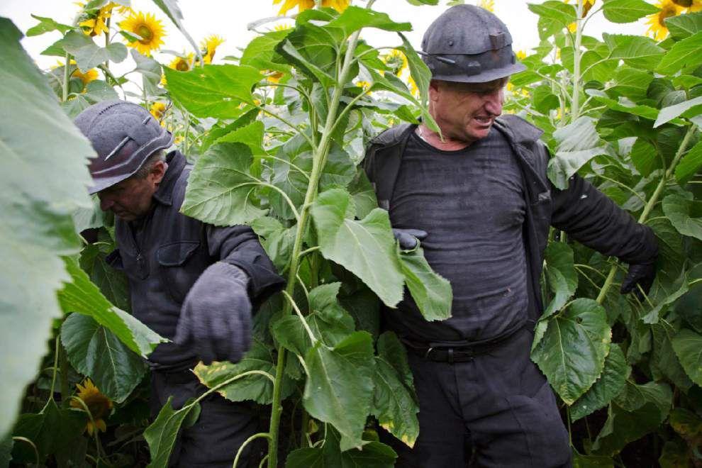 181 bodies found at Malaysia crash site in Ukraine _lowres