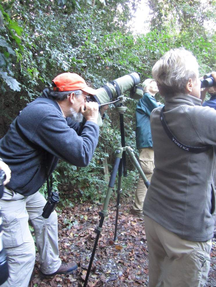 Bring binoculars for monthly Bluebonnet Bird Walk _lowres